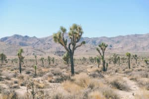 0012-most-excited-about-desert-unsplashed